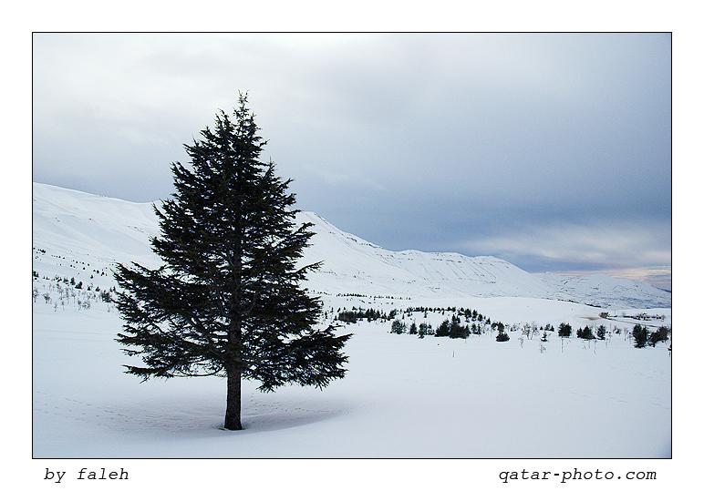 اجمل مناظر لبنان 152511.jpg