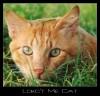 Lookt_Me_Cat.jpg