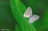 butterfly111.jpg