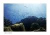 under-water2.jpg